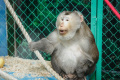 Сахалинцев приглашают отметить дни рождения обитателей зоопарка