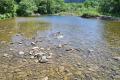Экологи не нашли горбушу всахалинских нерестовых реках