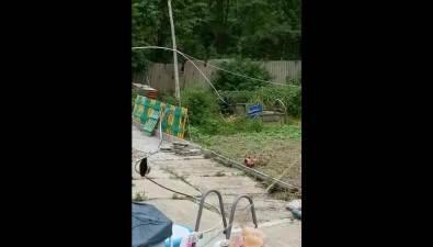 Жители Чапаево опасаются соседей-медведей
