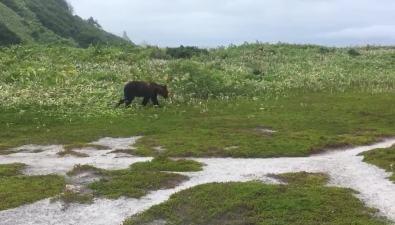 Медведь обосновался утуристического лагеря наКунашире