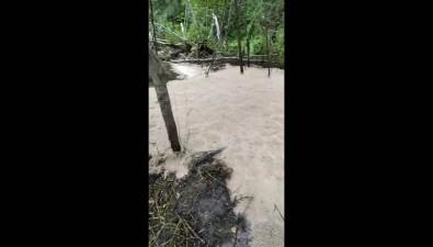 Реки изопарышей: наСахалине браконьеры массово вырезают горбушу