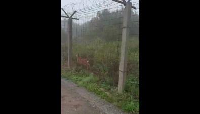 Врайоне южно-сахалинского аэропорта бегает олененок