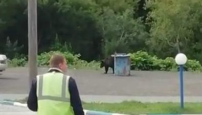 ВХолмске медведь пришел наавтозаправку