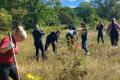 Кконцу осени вСахалинской области высадят 4,3 тысячи деревьев