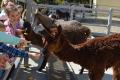 День рождения Бриллианта отпраздновали всахалинском зоопарке