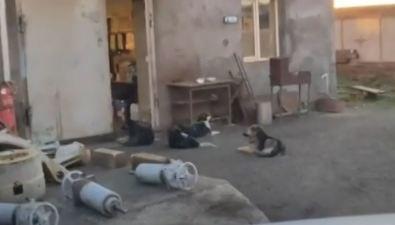 Холмчанка считает, чтособак сПортовой замуровали заживо из-за нападений