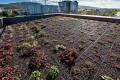 Эксперимент сзелеными крышами запустили вЮжно-Сахалинске