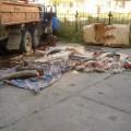 В Охинском районе водитель грузовика перевозил более тонны краснокнижной калуги