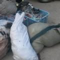 На Сахалине выявлен подпольный цех по переработке краснокнижной калуги