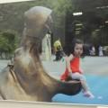 В Южно-Сахалинске открылась фотовыставка художника Де Сон Ена