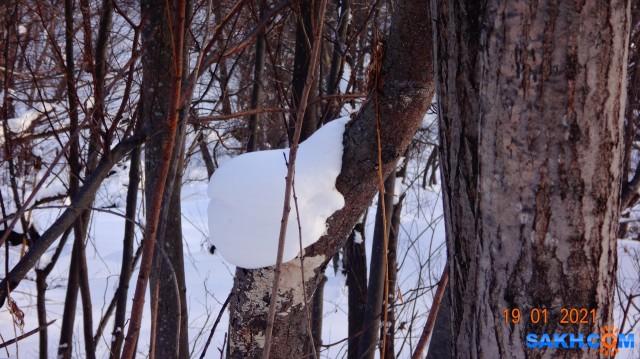 Ёжик в снегу...  Просмотров: 79 Комментариев: 0