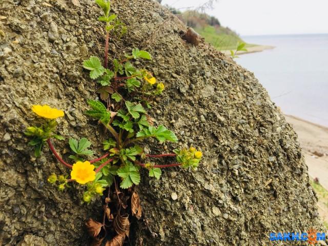 «Каменный цветок» :)  Просмотров: 574 Комментариев: 0
