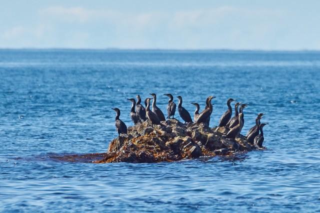 Бакланий островок Фотограф: VictorV  Просмотров: 401 Комментариев: 0