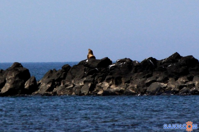 Одинокий... Фотограф: vikirin  Просмотров: 1789 Комментариев: 0