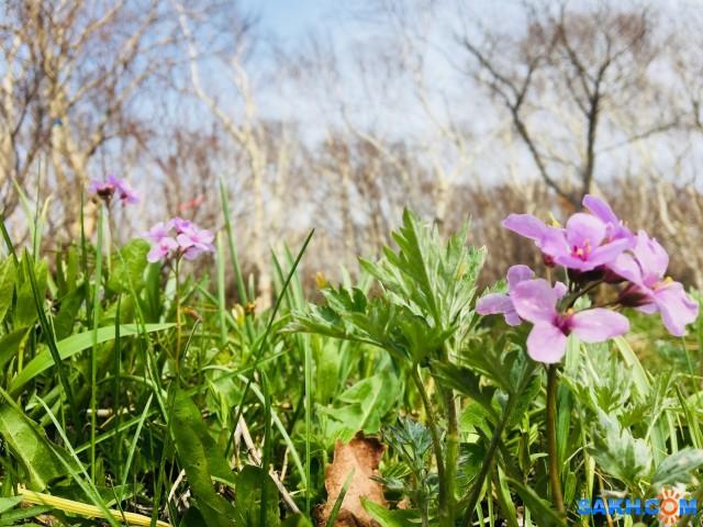 Цветочки с тонюсенькими листочками...