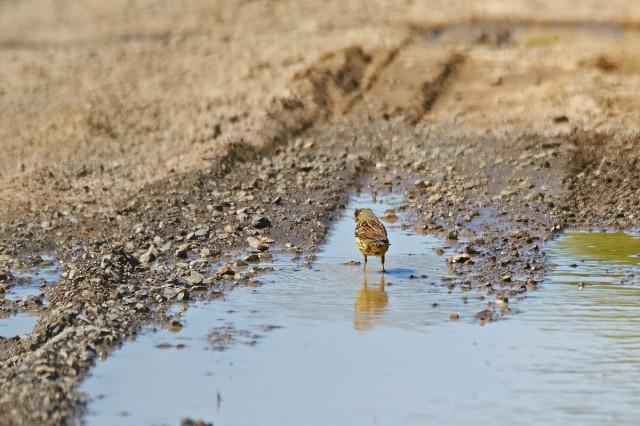 Эх, столько воды я не выпью ) Фотограф: VictorV  Просмотров: 407 Комментариев: 0