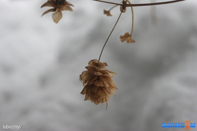 Новогодний хмель Фотограф: NIK  Просмотров: 651 Комментариев: 0