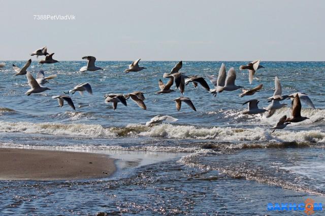 На фоне моря. Фотограф: 7388PetVladVik  Просмотров: 1326 Комментариев: 0