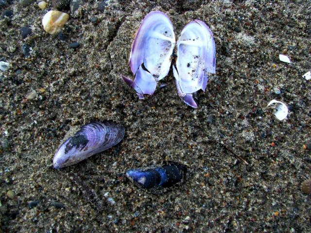 По берегу на песке лежат раскрытые ладошки синих раковин...
