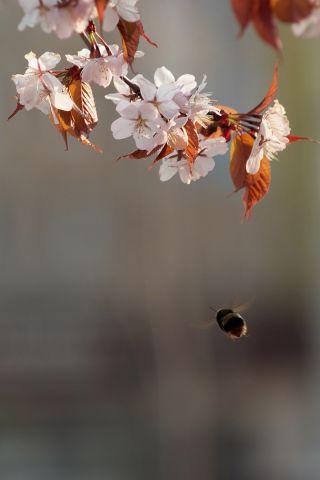 Полёт к намеченной цели... Фотограф: VictorV  Просмотров: 1997 Комментариев: 0