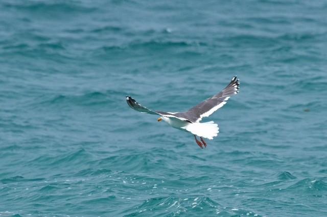 На посадку... Фотограф: VictorV  Просмотров: 978 Комментариев: 0