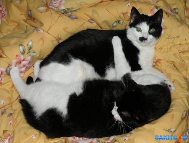 Сестренки Мася и Бася