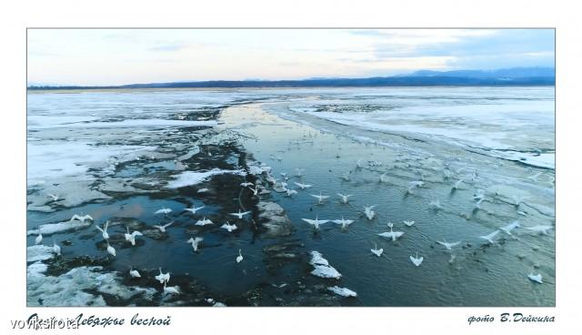 Озеро Лебяжье Фотограф: В.Дейкин  Просмотров: 467 Комментариев: 2