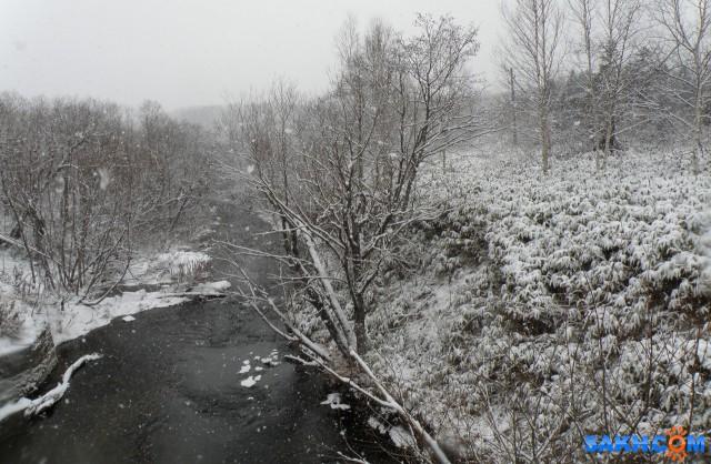 Зимний лес  Просмотров: 105 Комментариев: 0