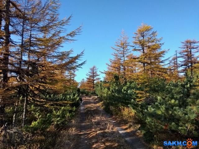 IMG_20191004_170107 - копия Фотограф: vikirin  Просмотров: 206 Комментариев: 0
