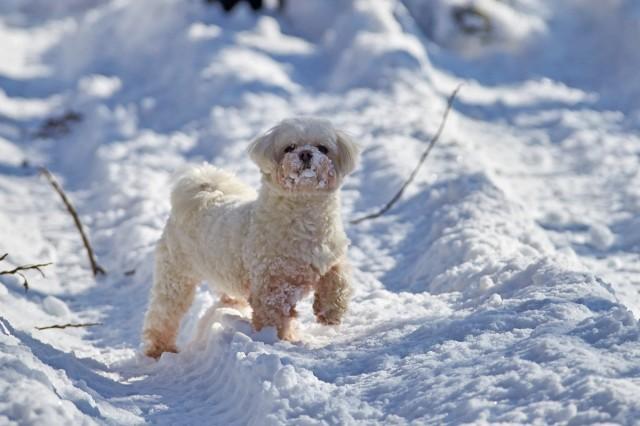 Сторожевой пёс :))) Фотограф: VictorV  Просмотров: 545 Комментариев: 0