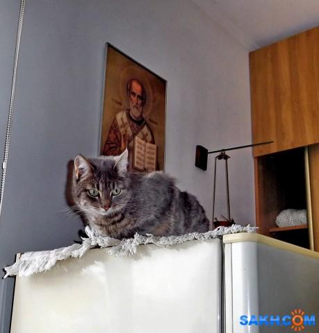 о чем думают кошки?