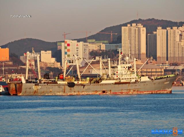 НЕВЕЛЬСК.  (бывший МАСТЕР, порт Пусан, 2016 г) Фотограф: 7388PetVladVik  Просмотров: 3749 Комментариев: 0