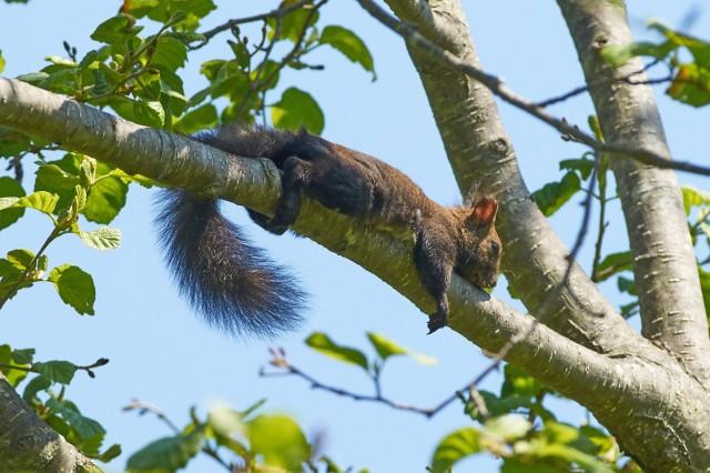 Обнимая дерево ) Фотограф: VictorV  Просмотров: 285 Комментариев: 4