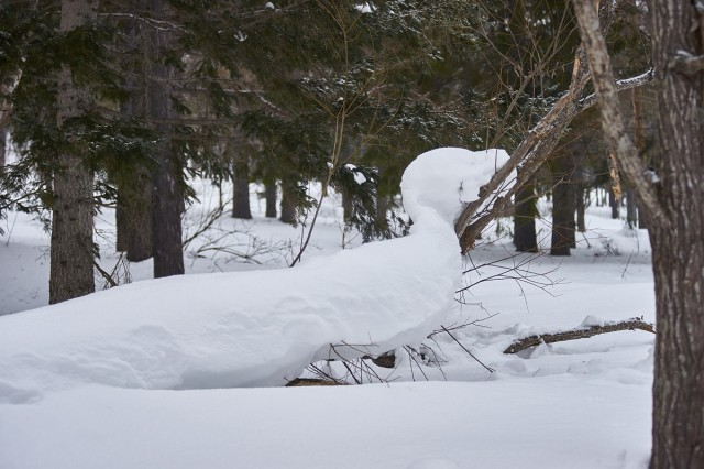 Снежный удав