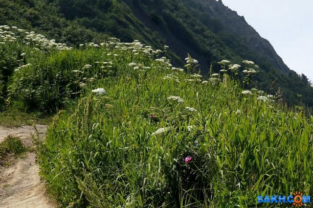 DSC09482 Фотограф: vikirin  Просмотров: 434 Комментариев: 0