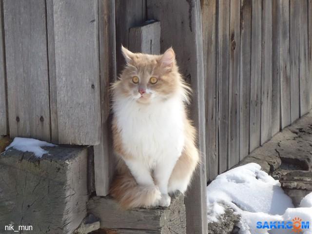 соседский кот  Просмотров: 246 Комментариев: 1
