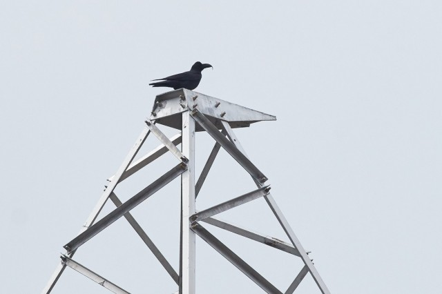 ПтичкО )) Фотограф: VictorV  Просмотров: 303 Комментариев: 0