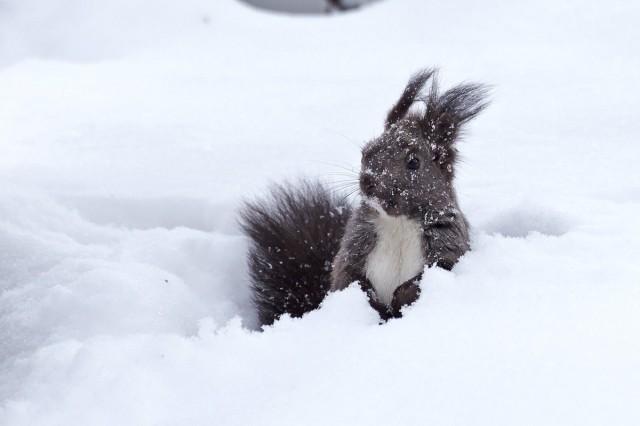 Снежные забавы Фотограф: VictorV  Просмотров: 210 Комментариев: 0