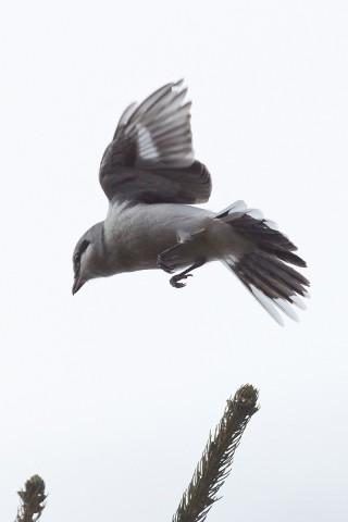 Зависание... Фотограф: VictorV  Просмотров: 304 Комментариев: 0