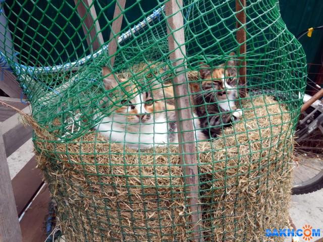 кошки на сене