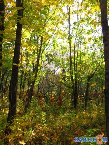 осенний лес  Просмотров: 1375 Комментариев: 0