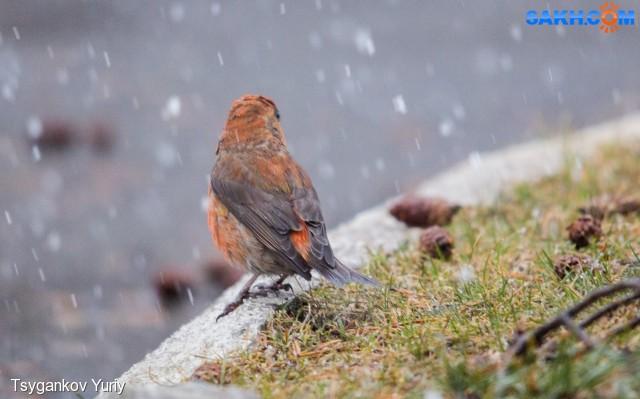 А снег идет!