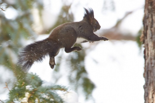 Ходьба по воздуху ) Фотограф: VictorV  Просмотров: 272 Комментариев: 2