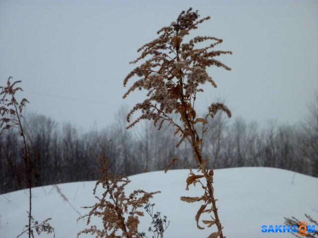 а снег идёт...  Просмотров: 441 Комментариев: 0