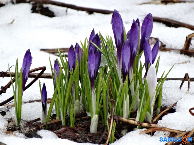 Фото весна на сахалине