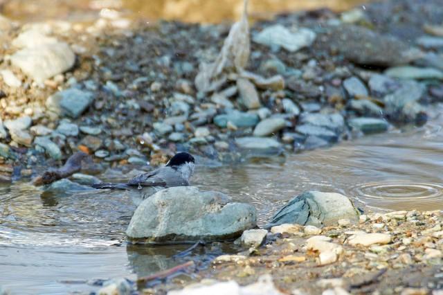 Водные процедуры )) Фотограф: VictorV  Просмотров: 1032 Комментариев: 0