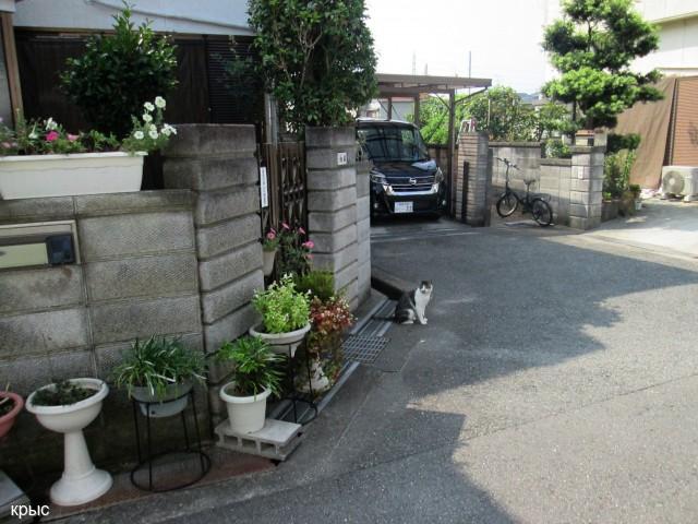 Кот хозяин квартала