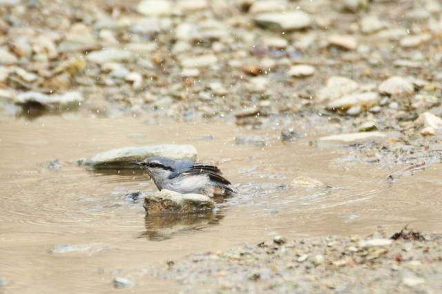 Водные процедуры всем  полезны )) Фотограф: VictorV  Просмотров: 844 Комментариев: 0