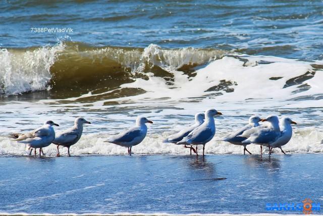 Прогулка по берегу моря. Фотограф: 7388PetVladVik  Просмотров: 1320 Комментариев: 0