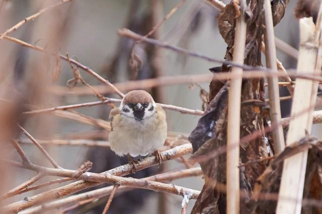 Самый страшный птиц  в лесу ))) Фотограф: VictorV  Просмотров: 350 Комментариев: 0